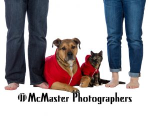 Furbabies, cats and dogs #yeg #animal #pet #dog #cat #family #photographers #pictures #photos