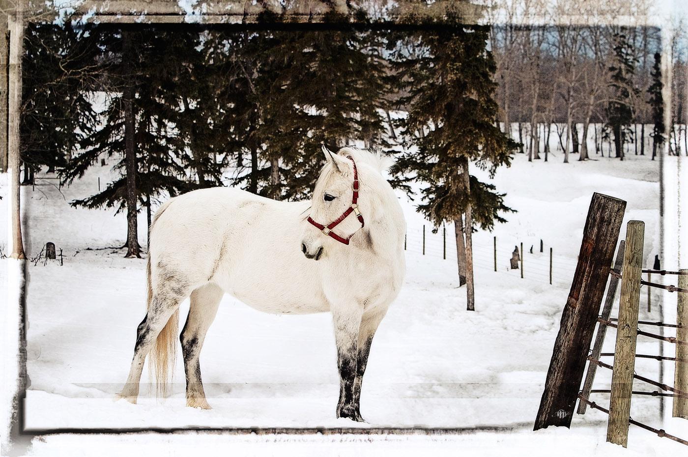Edmonton Photographer Animal Photo Sample